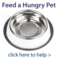 Feed a Hungry Pet